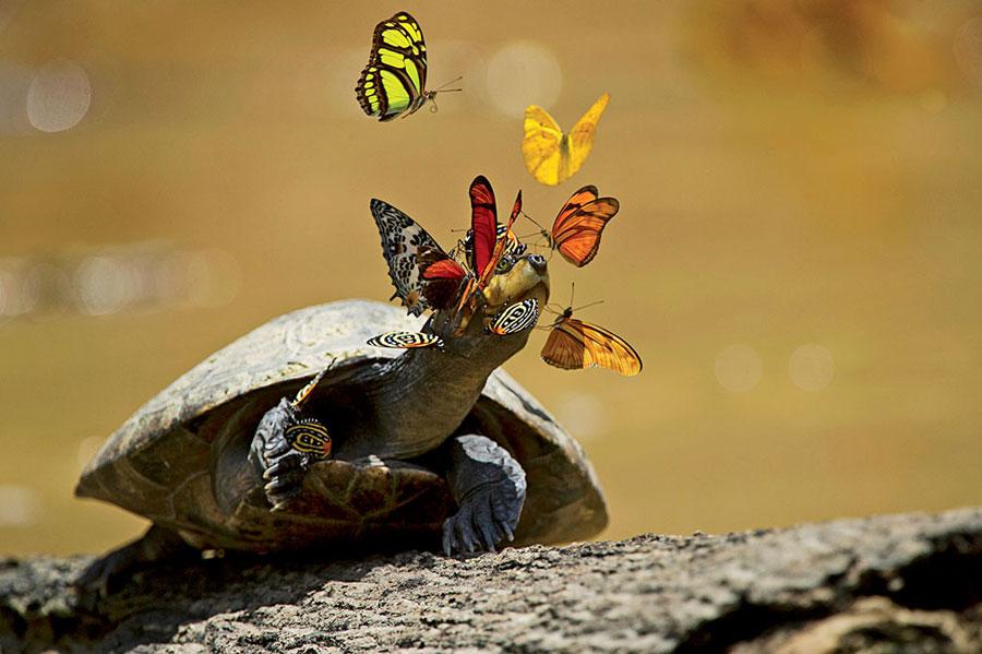 Borboletas e tartaruga