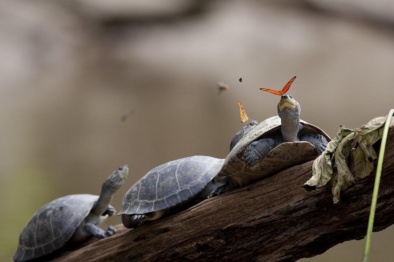 Borboletas e tartarugas