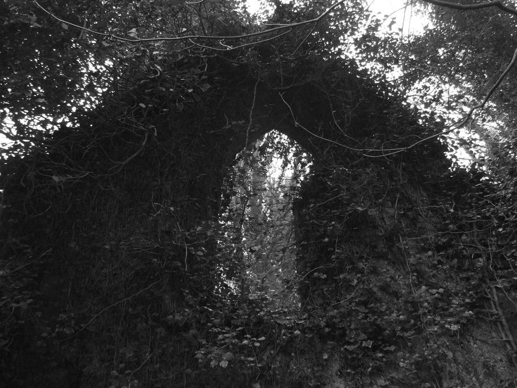 Floresta de Oxney Botton