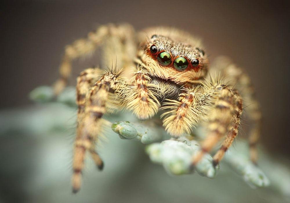 Aranha fotogênica