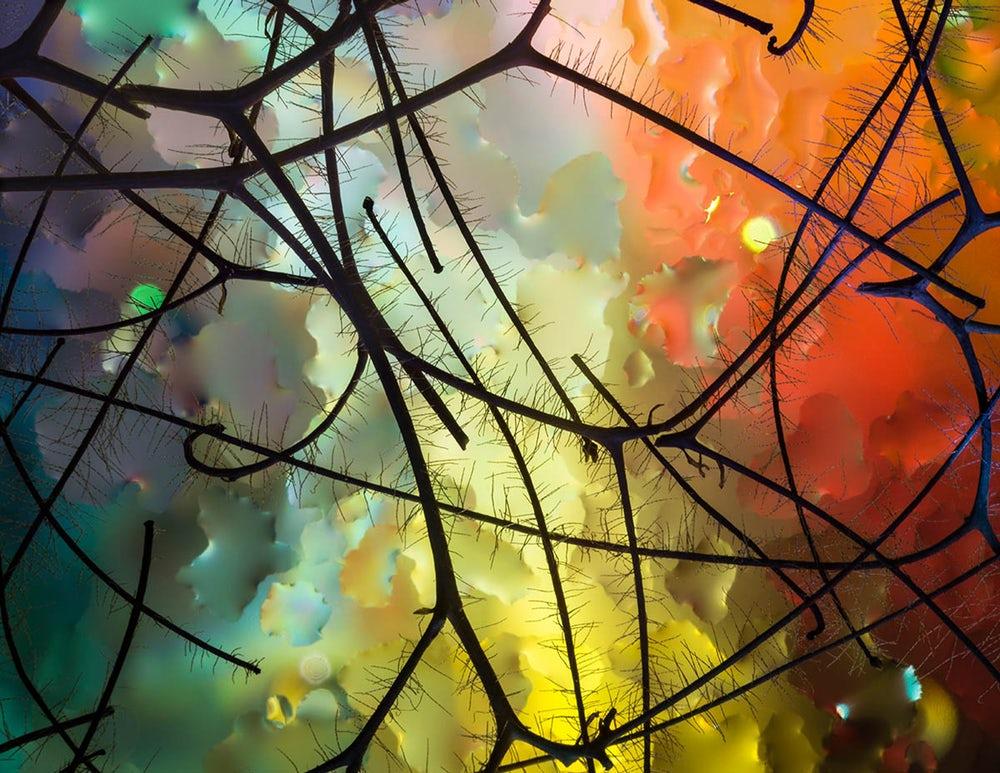 Jardim de Miró