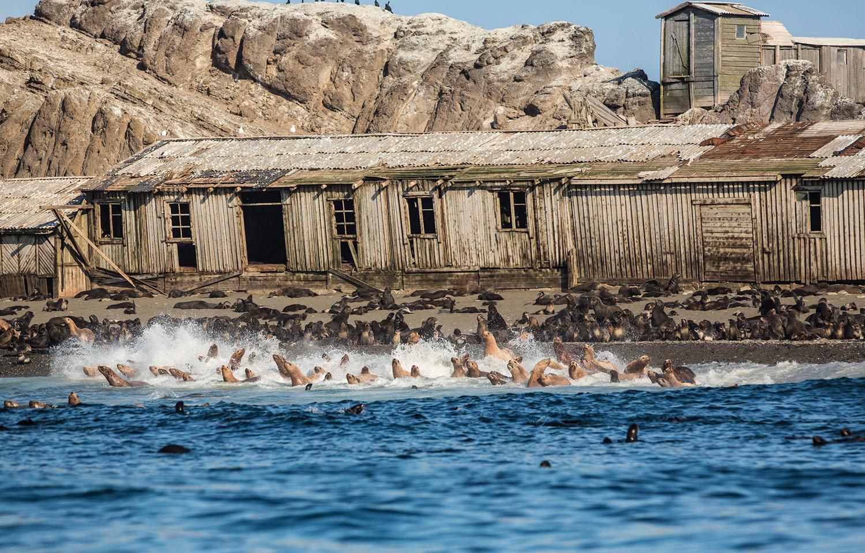 Colônia de focas