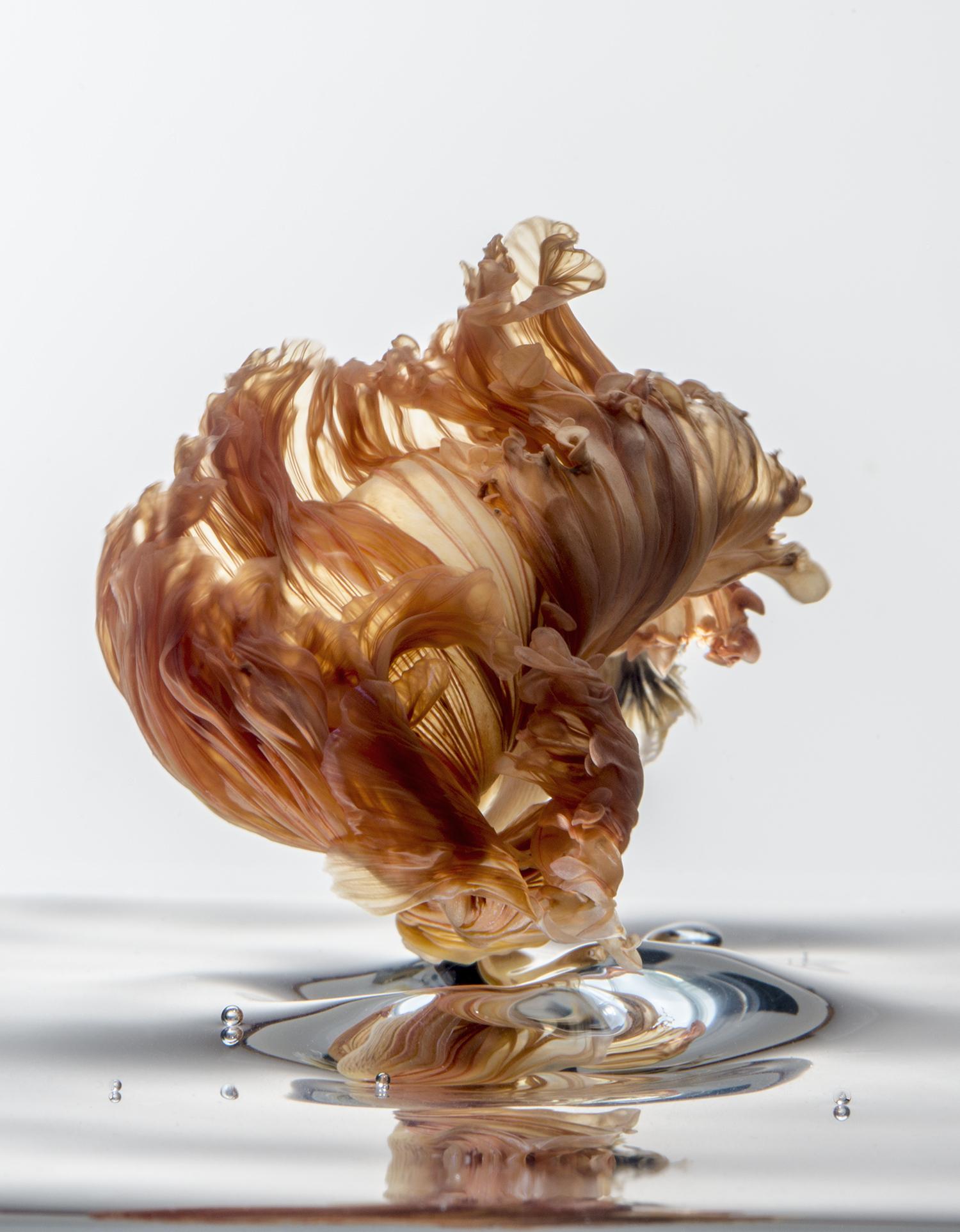 Peixinho beta