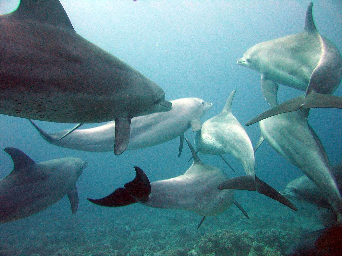 Grupo de golfinhos