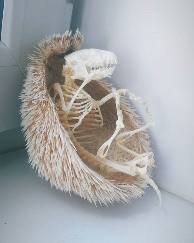 Esqueleto de animal