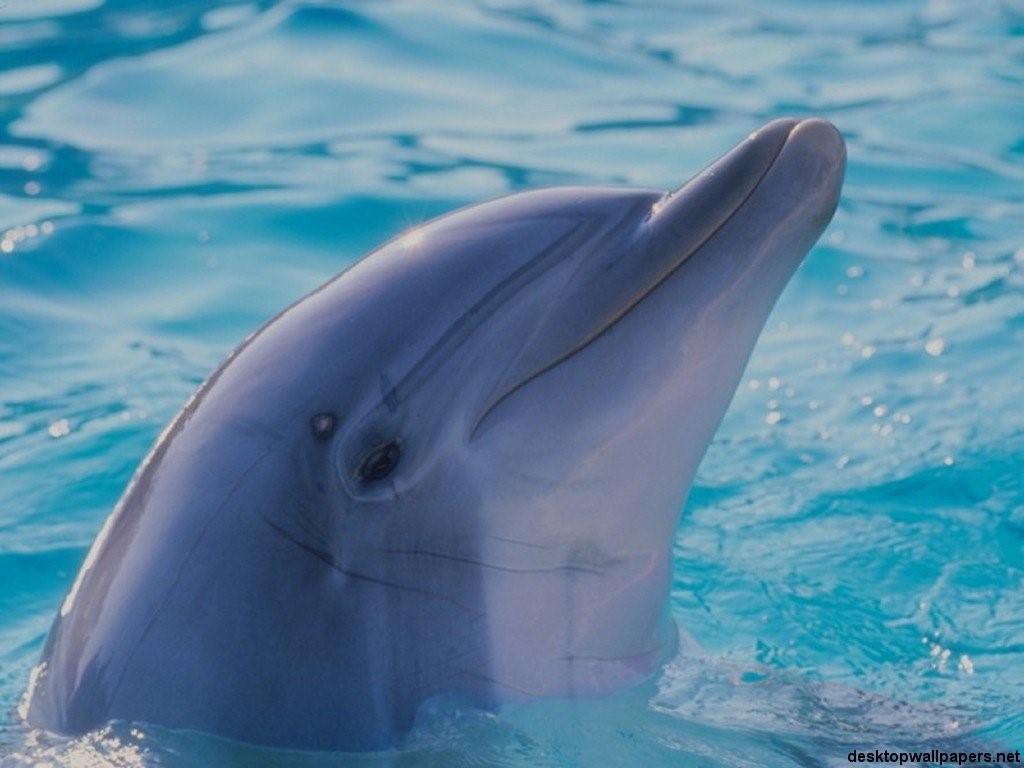 Golfinho charmoso