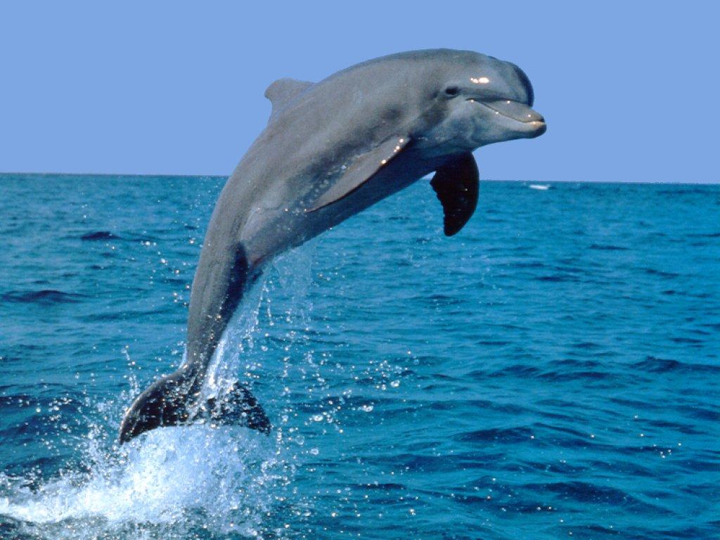 Golfinho saltitante