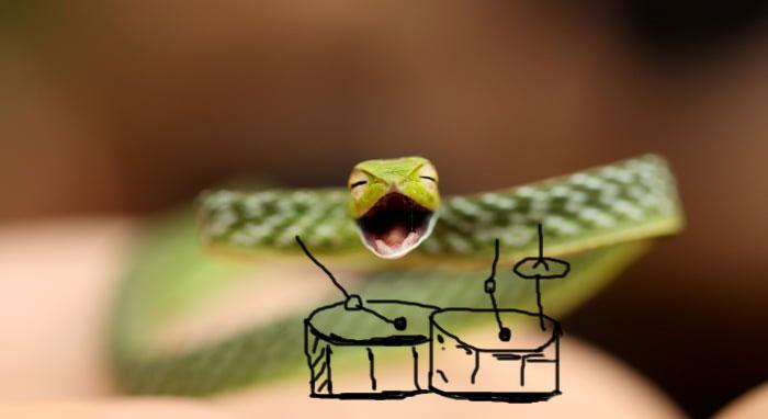 Cobra baterista