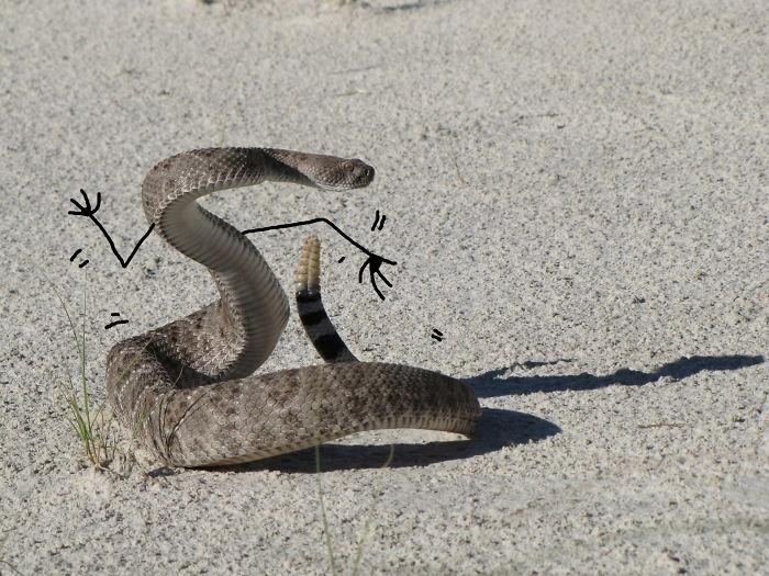Cobra dançarina