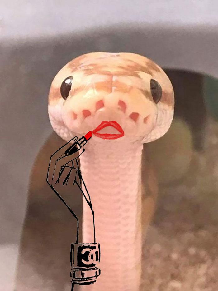 Cobra maquiada