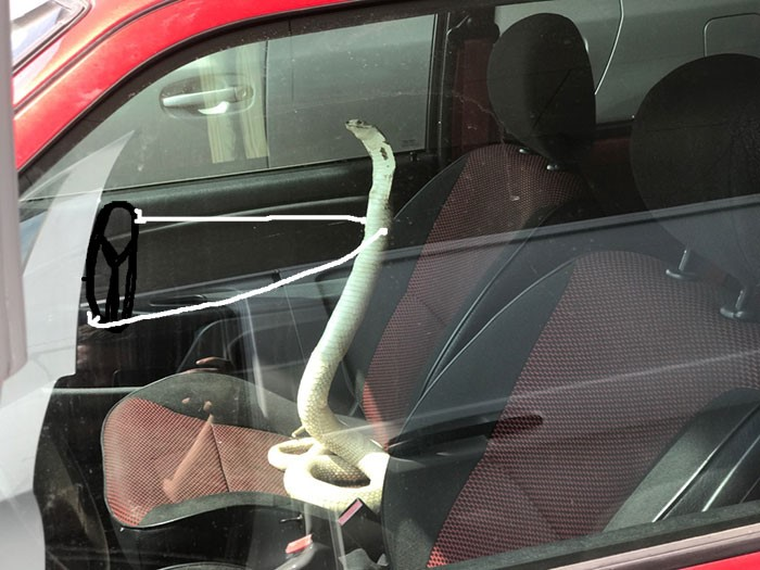 Cobra motorista