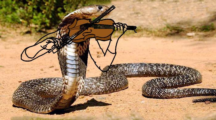 Cobra musical