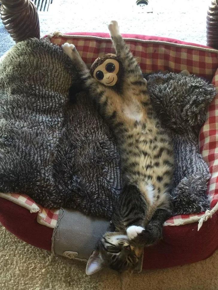 Gato se espreguiçando
