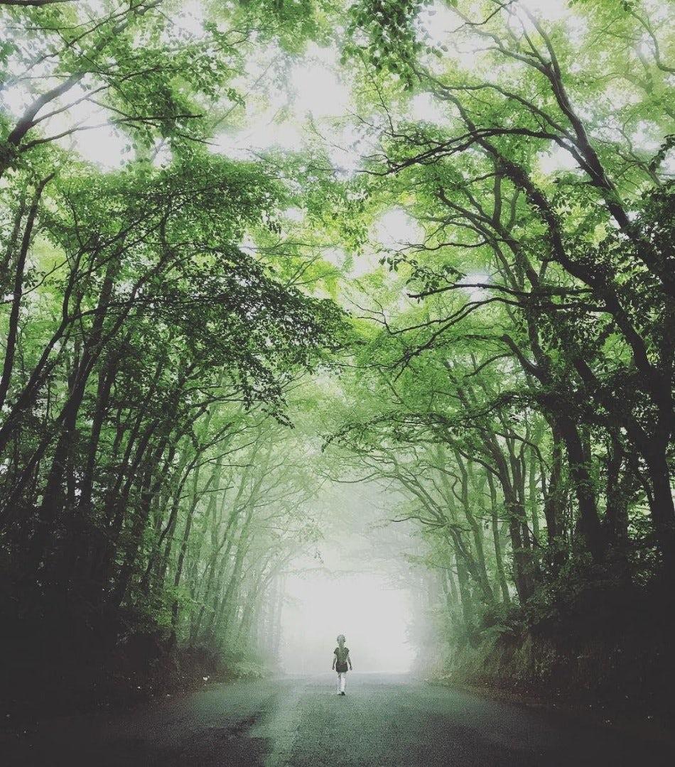 Caminho cheio de parvores