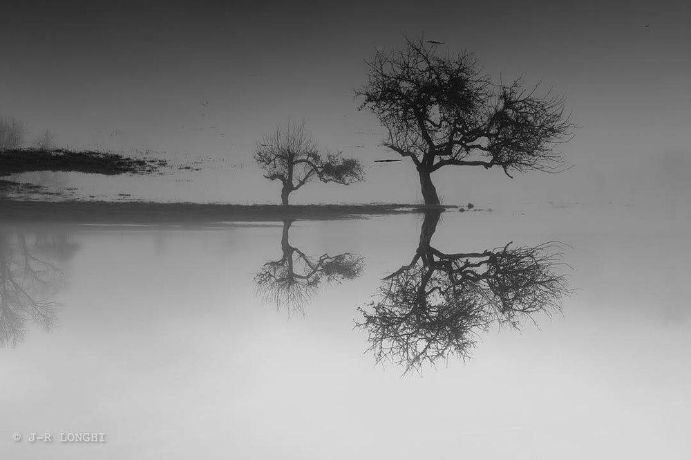 Reflexo de árvores em lago