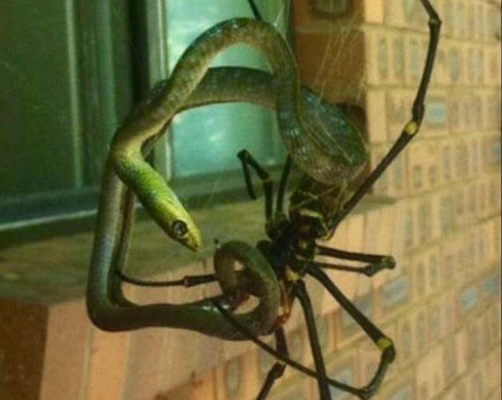 Cobra e aranha