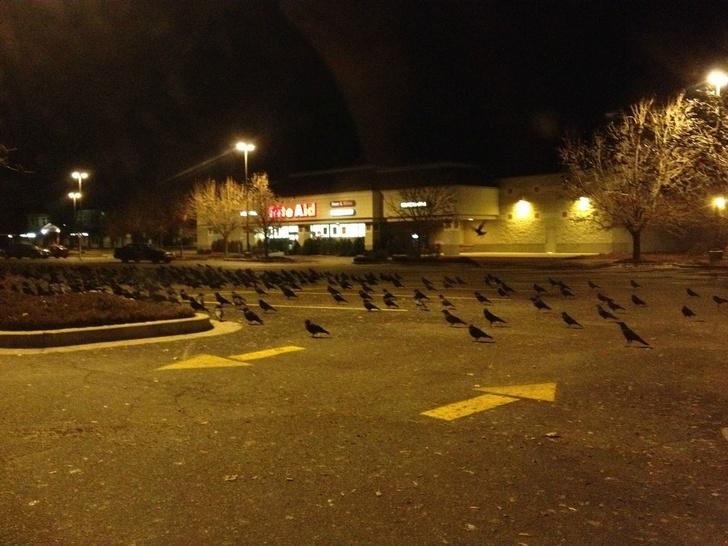Pássaros na escuridão