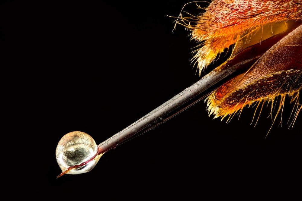 gotinha de veneno de vespa