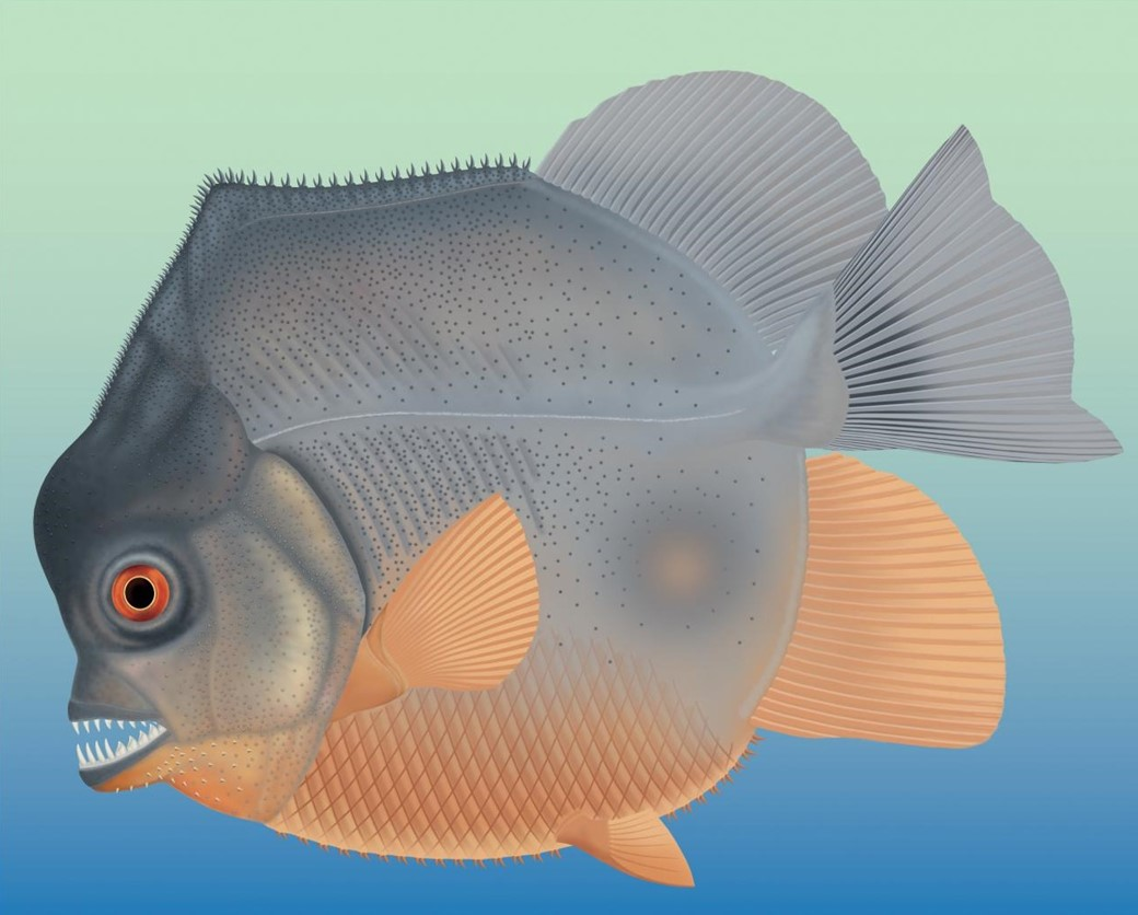 Ilustração de piranha