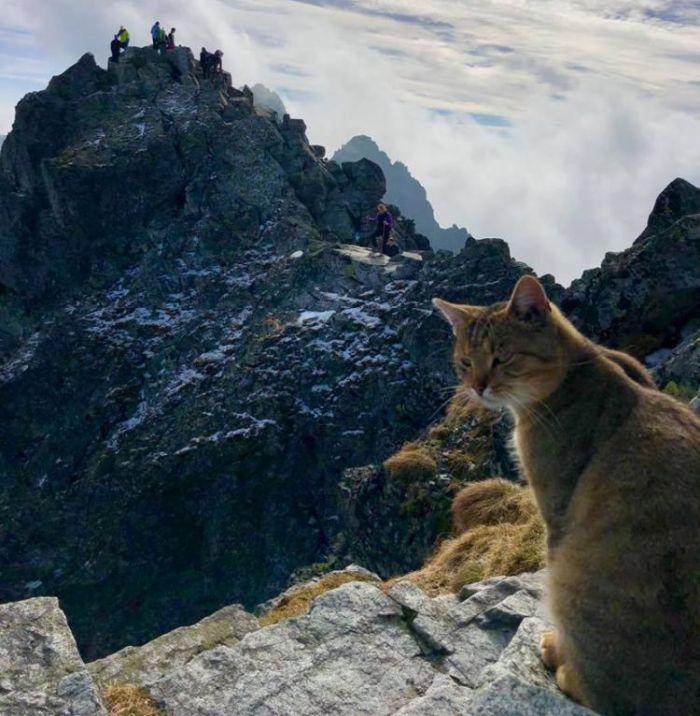 Gato alpinista