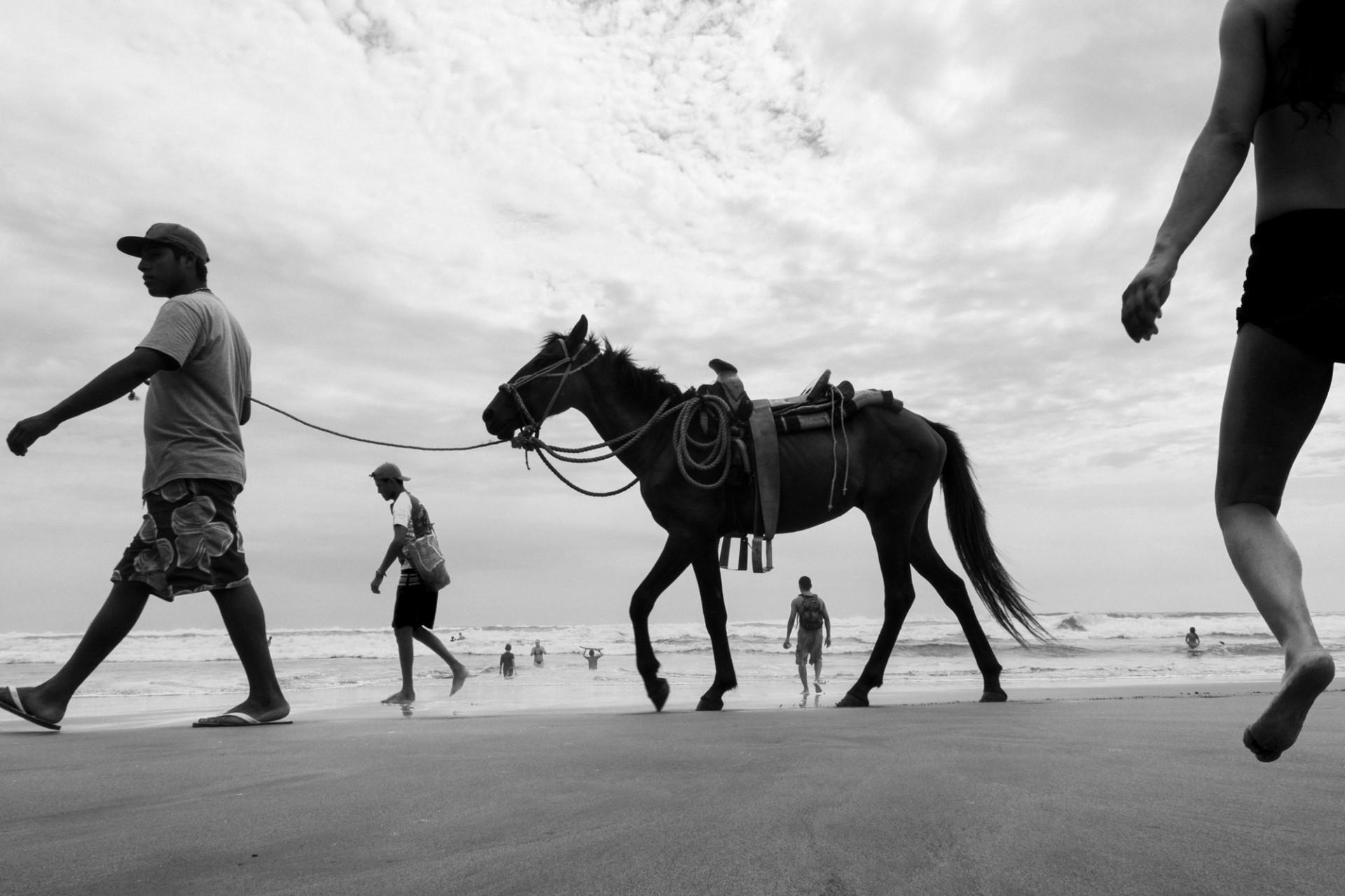 Passeando com cavalo