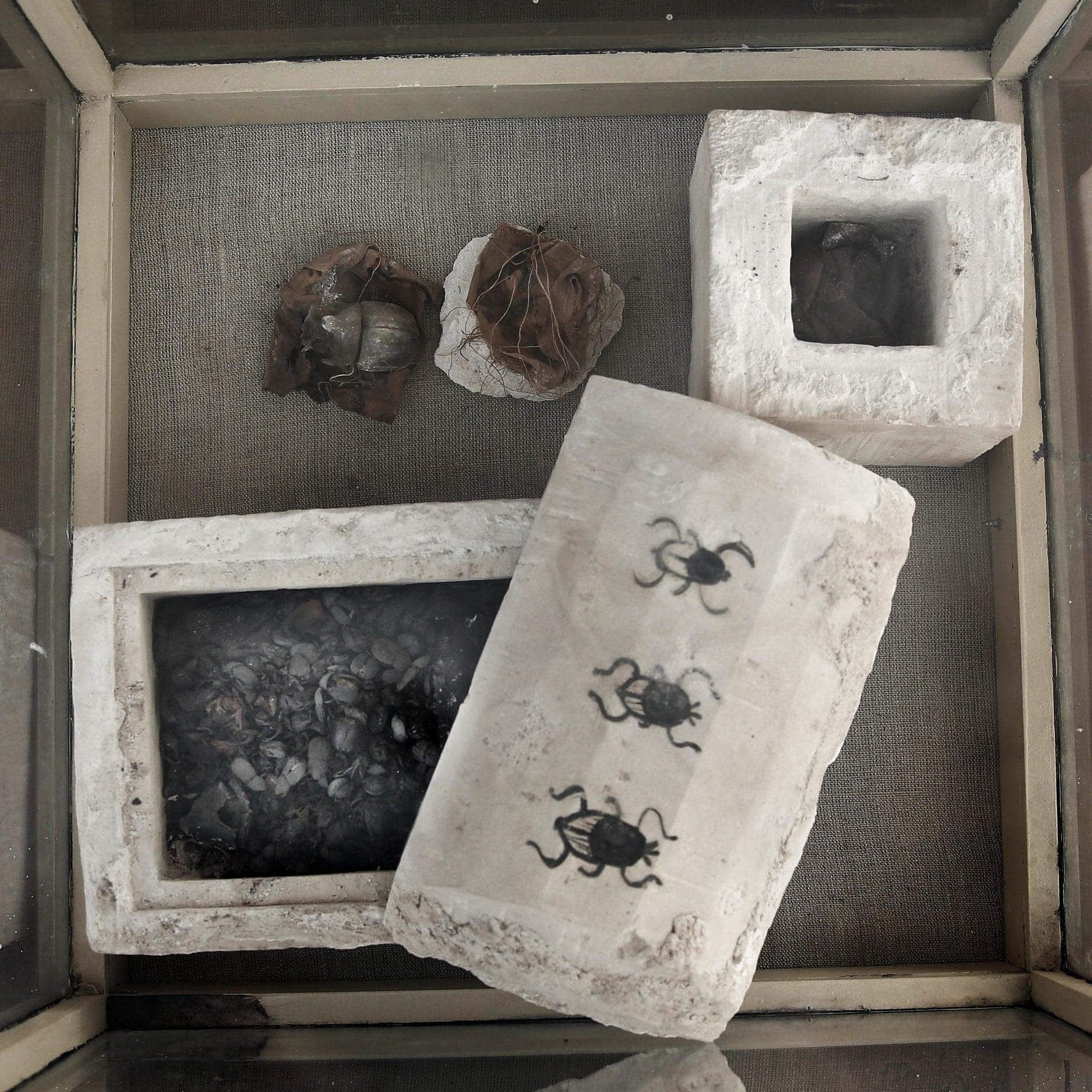 Besouros mumificados