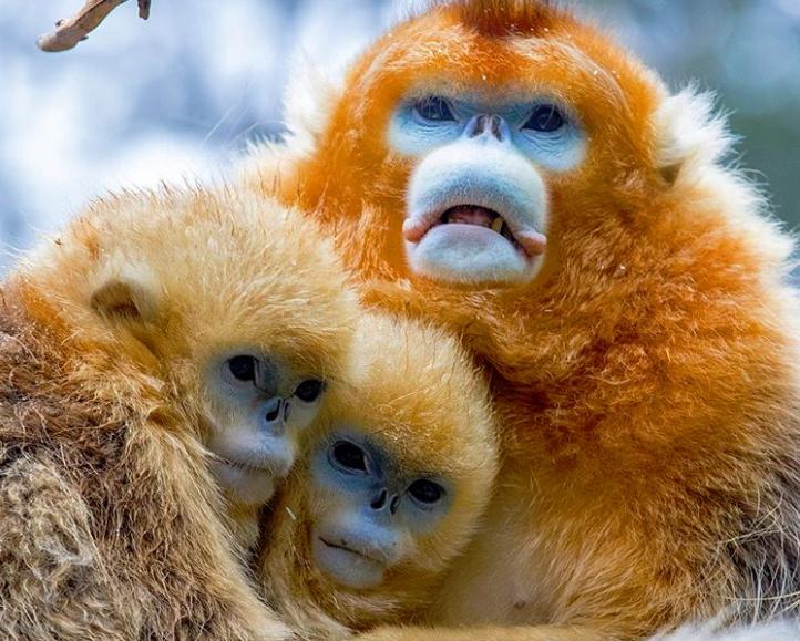animais feios