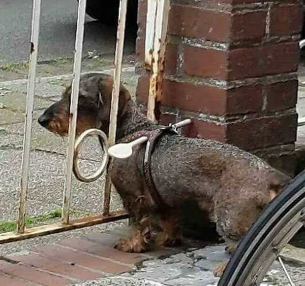 Cachorro fujão