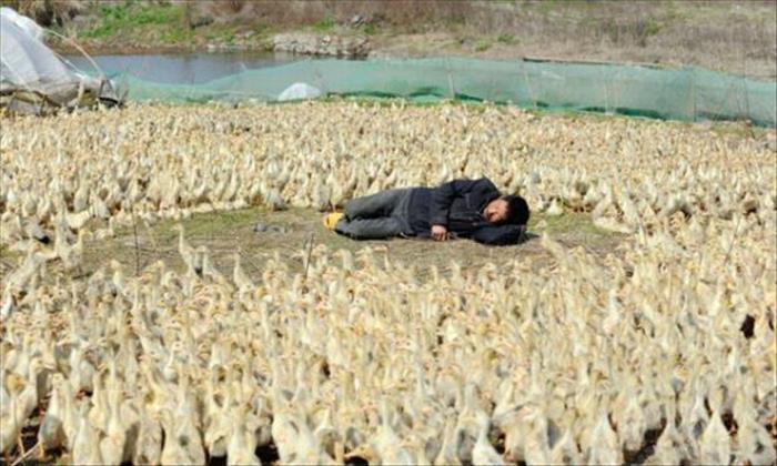 Homem tirando soneca