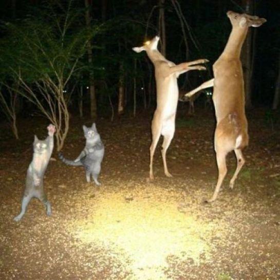 Animais muito loucos no bosque