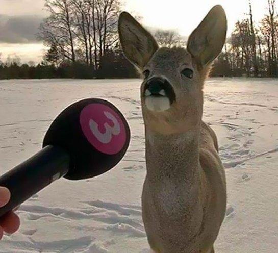 Animal sendo entrevistado
