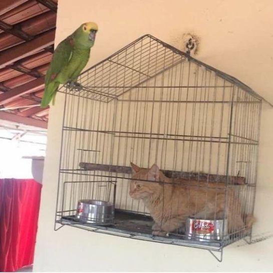 Gato na gaiola