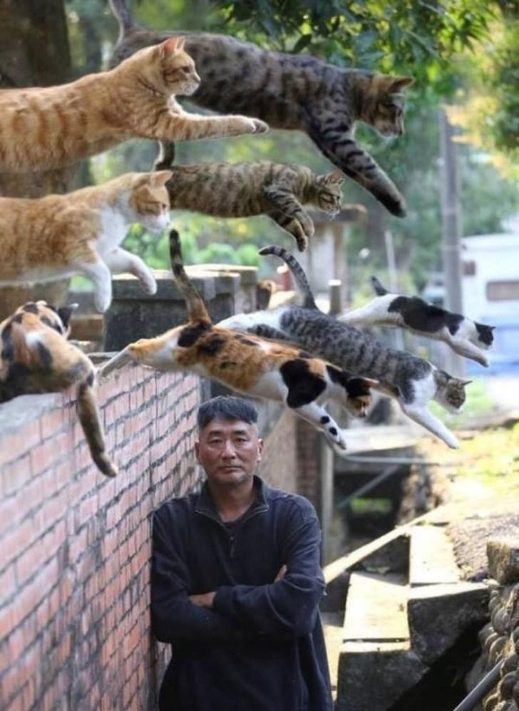 Homens rodeado por gatos