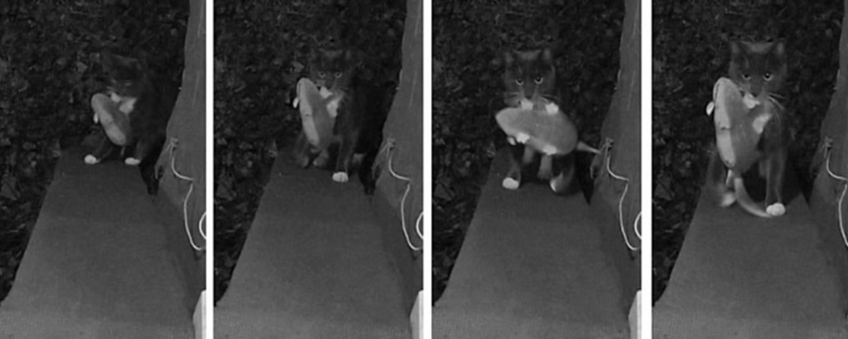 Imagem de: Porta inteligente evita que gatos tragam bichos mortos para dentro de casa
