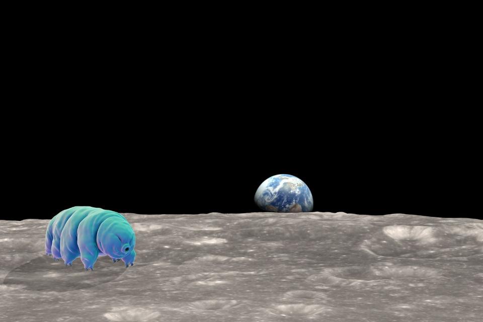 Sonda israelense 'infectou' a Lua com milhares de organismos terrestres