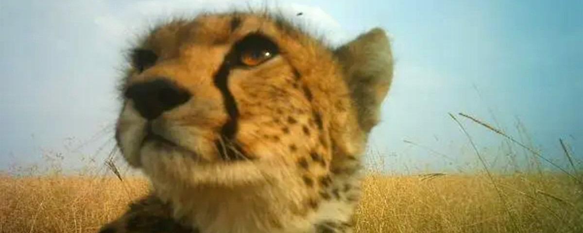 DeepMind utiliza IA para catalogar vida selvagem no Serengeti via fotos