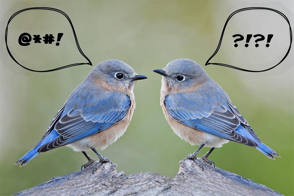 Twitter está testando como detectar e esconder DMs ofensivas