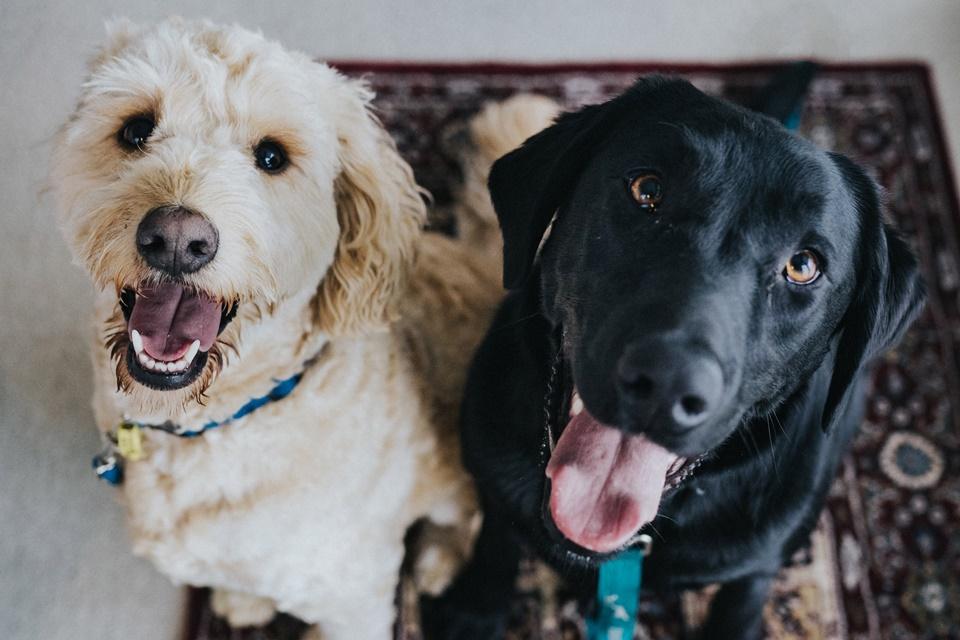 Cachorros vão ajudar a combater ansiedade em torneio de Super Smash Bros.