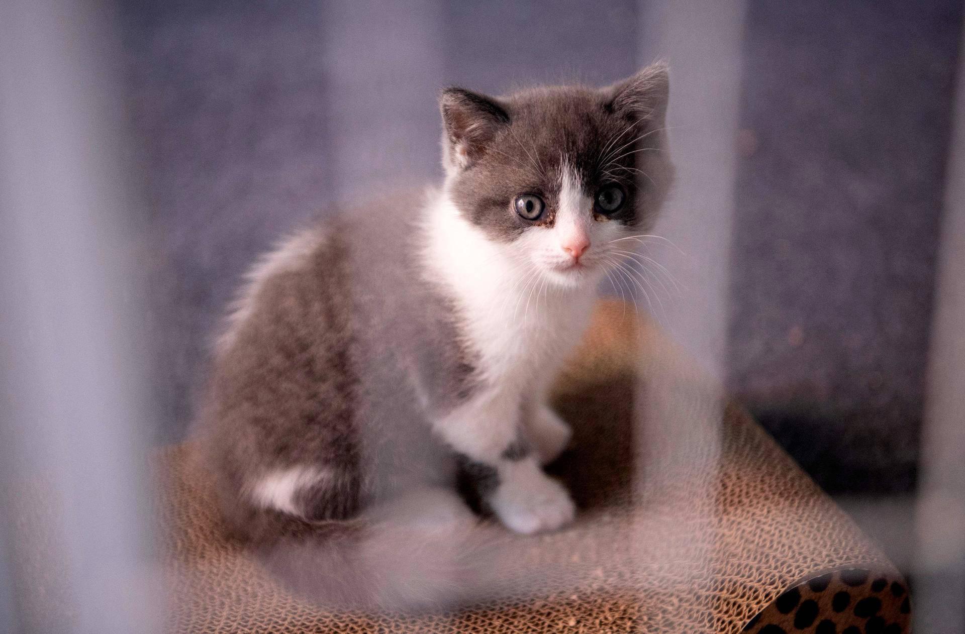 Empresa chinesa realiza primeira clonagem de gato