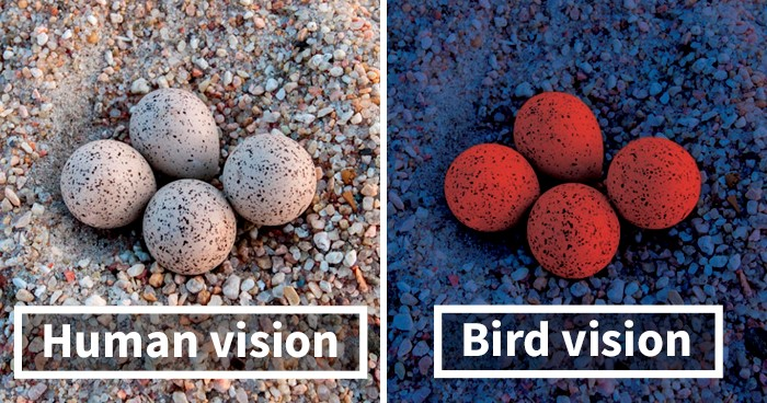 diferença de cores na visão humana