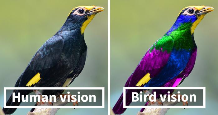 diferença na visão das cores
