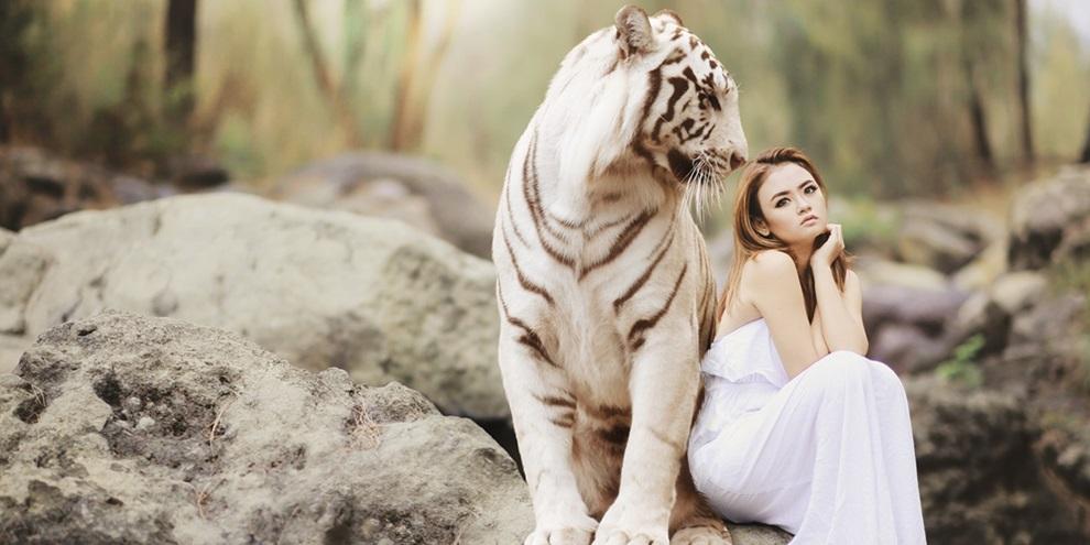 Tigres de estimação são desejados no mundo. (Fonte: Pixabay)