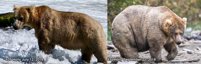 urso ganhador