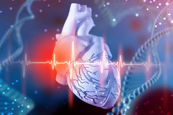 ilustração de coração humano