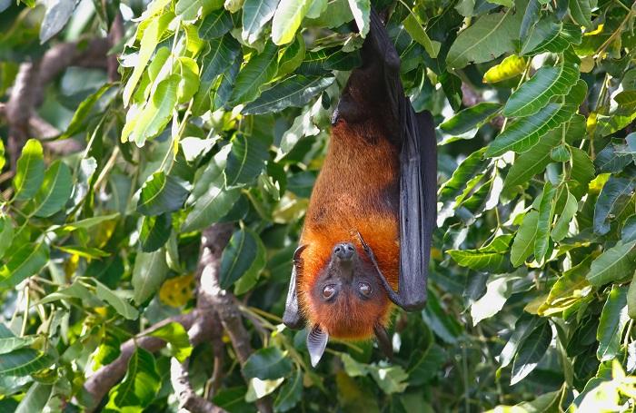 morcego pendurado em uma árvore