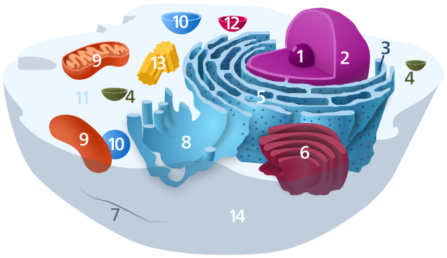 estrutura celular