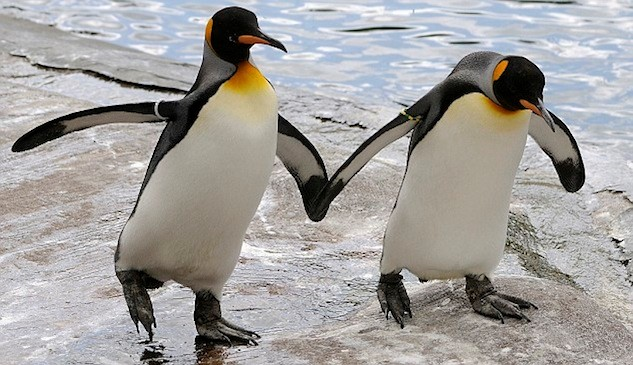 https://www.out.com/entertainment/popnography/2011/12/13/gay-penguins-are-totally-moving