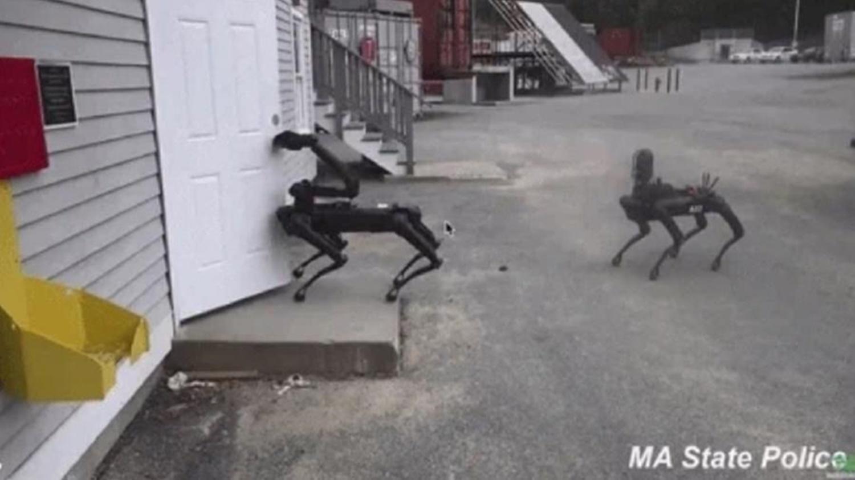 Cão-robô já é utilizado em operações pela polícia americana