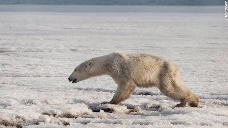 https://edition.cnn.com/2019/05/06/world/one-million-species-threatened-extinction-humans-scn-intl/index.html