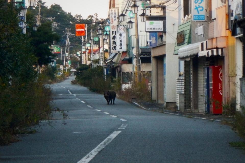 Fukushima: vida selvagem floresce na zona de exclusão da usina nuclear